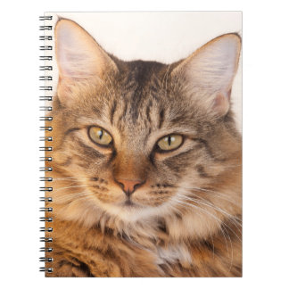 Maine Coon Kitty Notebook