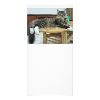 maine coon laying 2 photo card template