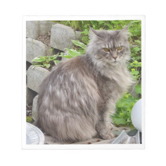 maine coon sitting 2 notepad