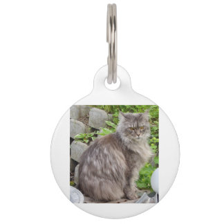 maine coon sitting 2 pet name tag