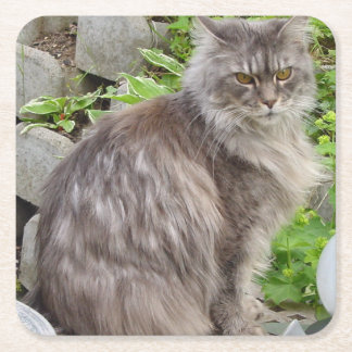 maine coon sitting 2 square paper coaster