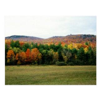 Maine Foliage Postcard