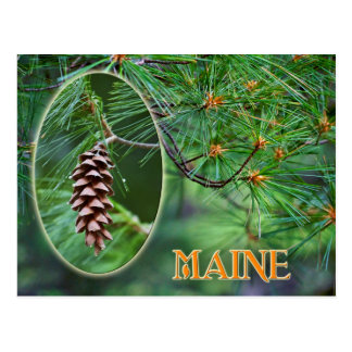 Maine State Flower: White Pine Cone and Tassel Postcard