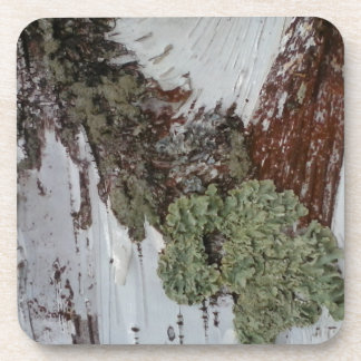 Mainely Birch Coaster