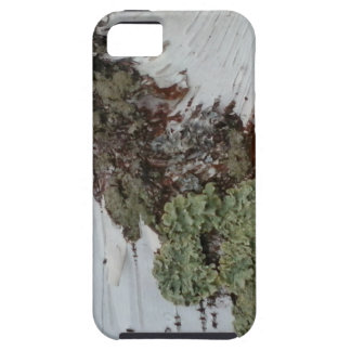 Mainely Birch iPhone 5 Covers