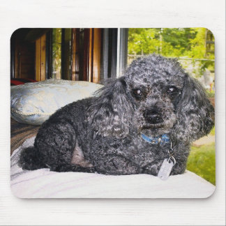 Maitai The Poodle, Mouse Pad. Mouse Pad