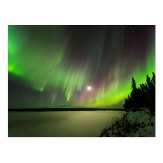Majestic Aurora Postcard