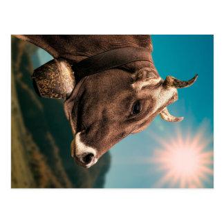 Majestic Cow Postcard