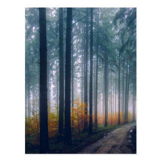 Majestic Forest Path Postcard