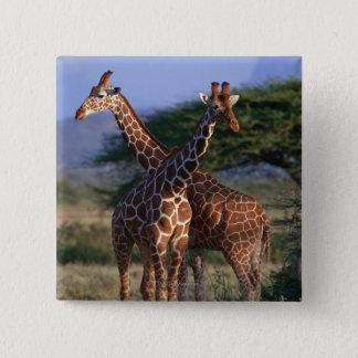 Majestic Giraffes 2 Inch Square Button
