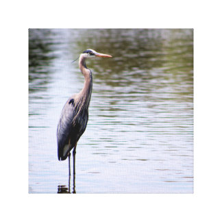Majestic Great Blue Heron Canvas Print
