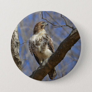Majestic Hawk 3 Inch Round Button