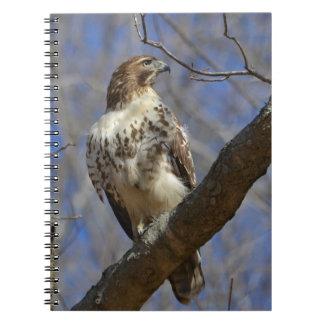 Majestic Hawk Notebooks