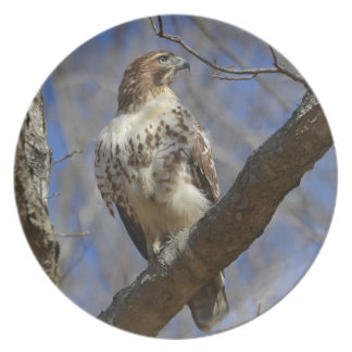 Majestic Hawk Plate