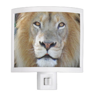 Majestic Lion Close Up Nite Lite