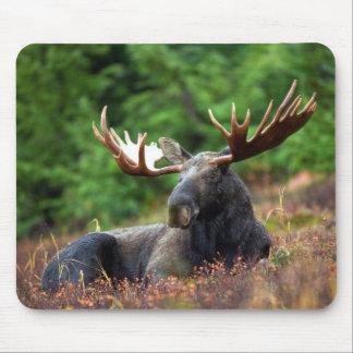 Majestic Moose Mouse Pad