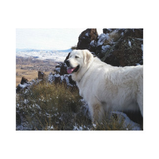 Majestic Mountain Dog Canvas Print