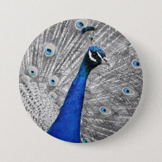 Majestic Peacock 3 Inch Round Button