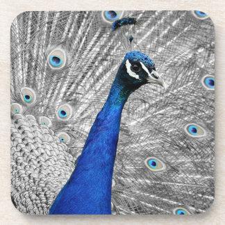 Majestic Peacock Coaster