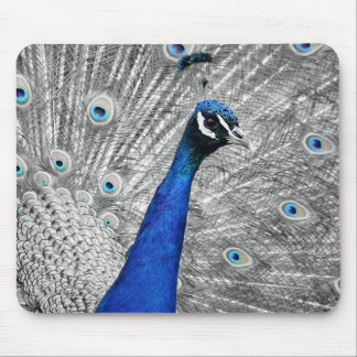 Majestic Peacock Mouse Pad