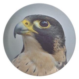 Majestic Peregrine falcon Party Plate