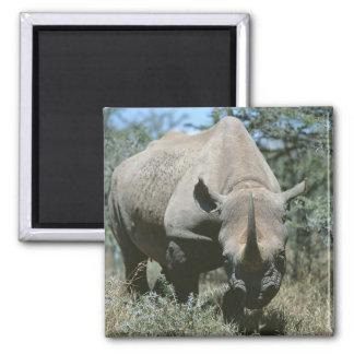 Majestic Rhino Square Magnet