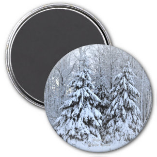 Majestic White Spruce Magnet