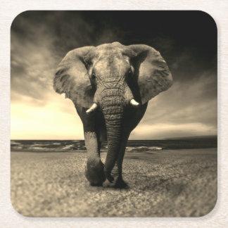 Majestic Wild Bull Elephant in Sepia Square Paper Coaster
