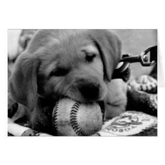 Major League Puppy - Greeting & Note Cards