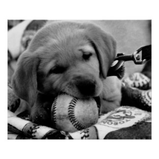 Major League Puppy - Poster & Print