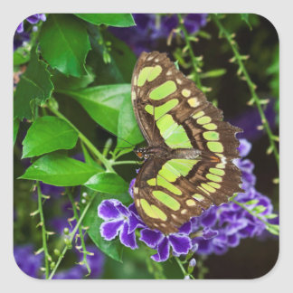 Malachite butterfly on purple flower square sticker