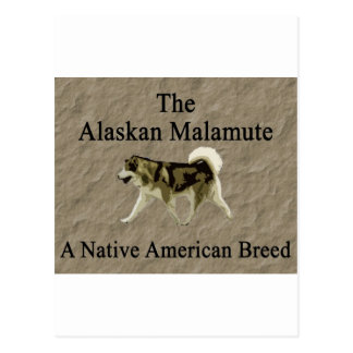 Malamute- Native Breed copy Postcard