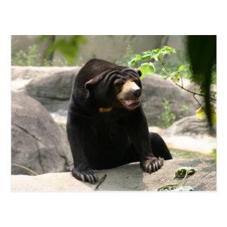 Malaya sun bear postcard