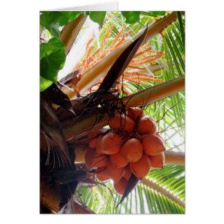 Malayan Orange Coconuts Card