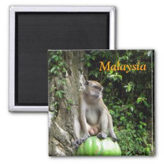 Malaysian Monkey Square Magnet
