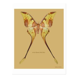 Malaysian Moon Moth Postcard