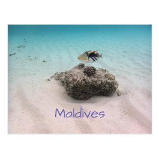 Maldives Blue Ocean White Sand Coral Triggerfish Postcard