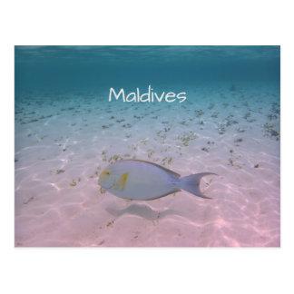 Maldives Paradise Turquoise Ocean Coral Fish Postcard