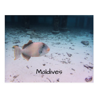 Maldives Snorkeling Adventure Coral Fish Souvenir Postcard