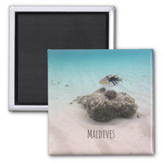 Maldives White Sand Lagoon Coral Fish Souvenir Magnet