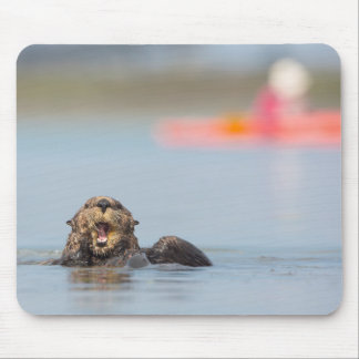 Male adult sea otter in Elkhorn Slough, California Mouse Pad