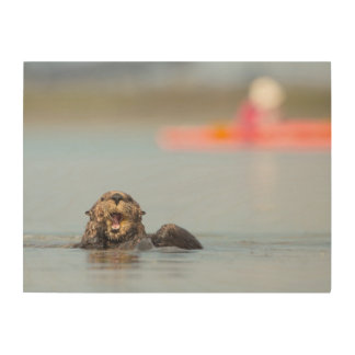 Male adult sea otter in Elkhorn Slough, California Wood Canvas