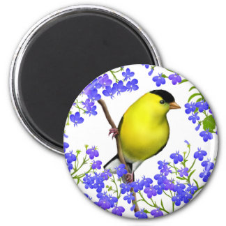 Male American Goldfinch in Lobelia Flowers Magnet