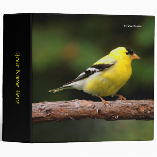 Male American Goldfinch on the Arbutus Binders