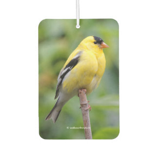 Male American Goldfinch on the Bamboo Air Freshener