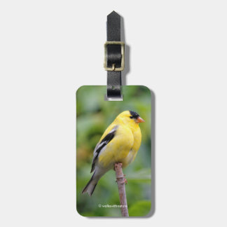 Male American Goldfinch on the Bamboo Bag Tag
