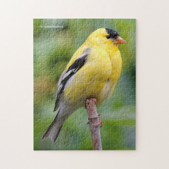 Male American Goldfinch on the Bamboo Jigsaw Puzzle