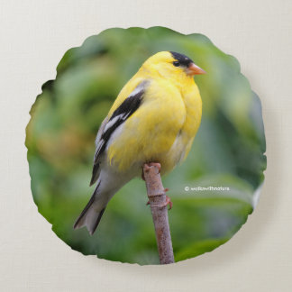 Male American Goldfinch on the Bamboo Round Pillow
