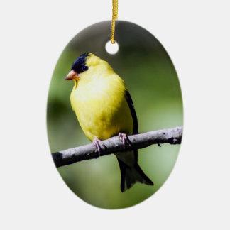 Male American Goldfinch Ornament