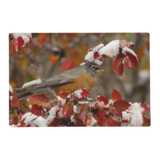 Male American Robin in Black Hawthorn Laminated Place Mat